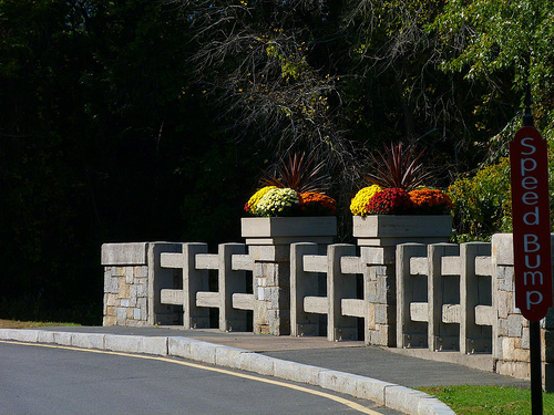 Post image for Bridge in Forest Park   Picture Massachusetts