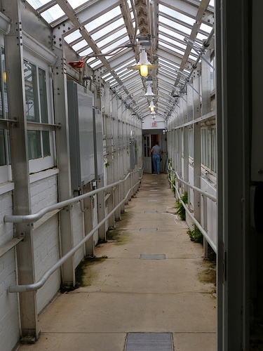 Post image for Inside the Green House at Smith College | Picture Massachusets